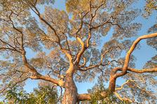 aka-Pantanal-2011-08-12__D3X6349_50_51_52_53.jpg