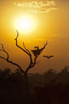 aka-Pantanal-2011-08-18__D3X9145.jpg