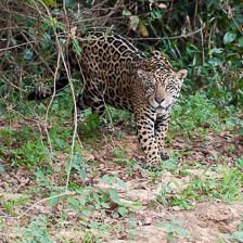 aka-Pantanal-2011-08-20__D3X0058.jpg