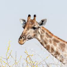 aka-Southern-Africa-2012-08-14__D3X6024.jpg