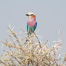 aka-Southern-Africa-2012-08-14__D3X6371.jpg