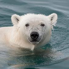 aka-Spitsbergen-2013-07-12__D3X8271.jpg