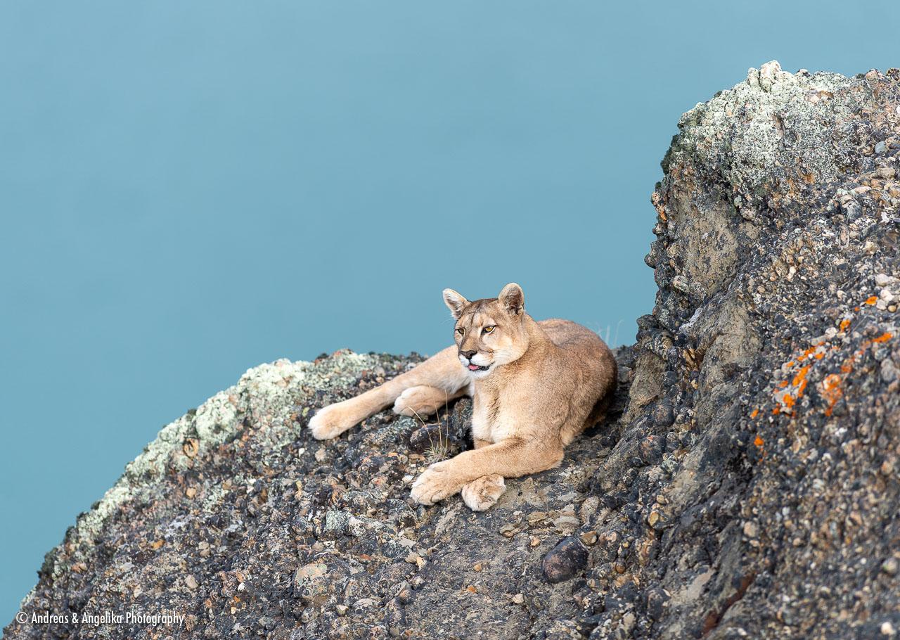 aka-Puma-2019-09-27__D5X8793.jpg