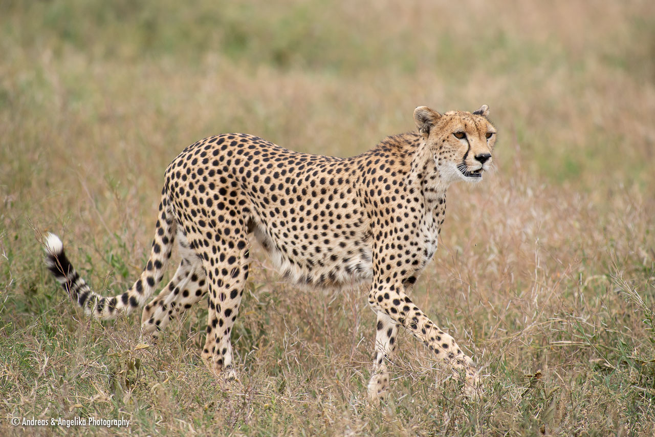 aka-Tanzania-2019-02-11__D5X8919.jpg