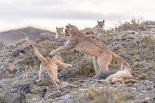 aka-Puma-2019-09-27__D5X9757.jpg