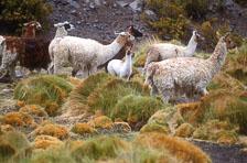 aka-Altiplano-2004-06-26_alt0013.jpg