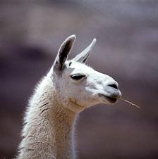 aka-Altiplano-2004-06-26_alt0020.jpg
