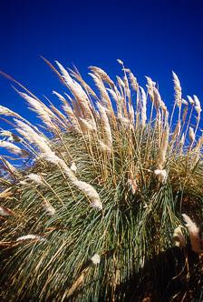 aka-Altiplano-2004-06-26_alt0021.jpg