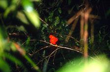 aka-Peru-2004-05-15_peru0020.jpg