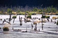 aka-Patagonia-2004-05-12_pata0007.jpg