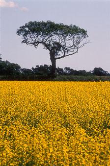 aka-South-England-2004-05-23_cam0004.jpg