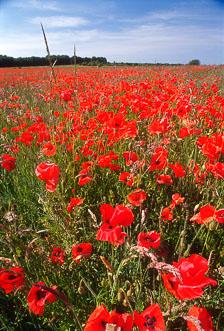 aka-South-England-2004-05-23_cam0005.jpg