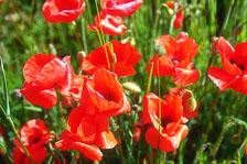 aka-South-England-2004-05-23_cam0006.jpg
