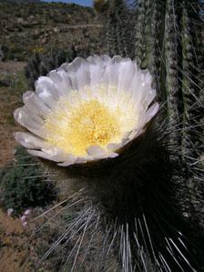 aka-Desierto-Florido-2004-10-08_DSCN1660.jpg