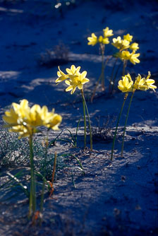 aka-Desierto-Florido-2004-10-24_df0004.jpg