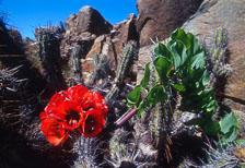 aka-Desierto-Florido-2004-10-24_df0009.jpg