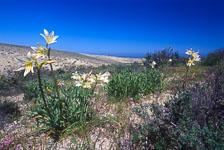 aka-Desierto-Florido-2004-10-24_df0015.jpg