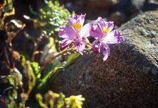 aka-Desierto-Florido-2004-10-30_df0018.jpg