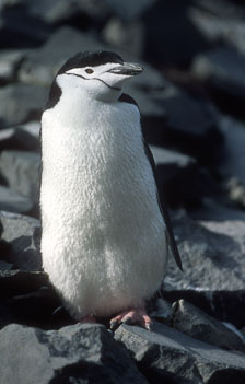 aka-Antarctica-2005-03-01_ant0019.jpg
