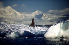 aka-Antarctica-2005-03-03_ant0031.jpg