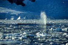 aka-Antarctica-2005-03-03_ant0032a.jpg
