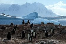aka-Antarctica-2005-03-03_ant0035.jpg