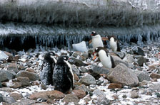 aka-Antarctica-2005-03-03_ant0038.jpg