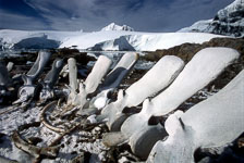 aka-Antarctica-2005-03-04_ant0042.jpg