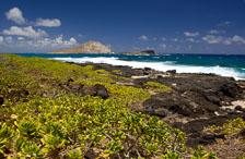 aka-Hawaii-2005-09-05_haw0007.jpg