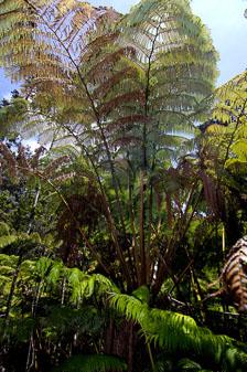 aka-Hawaii-2005-09-10_haw0013.jpg