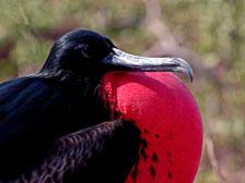 aka-Galapagos-2006-03-19_equ0035.jpg