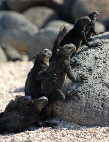 aka-Galapagos-2006-03-19_equ0039.jpg