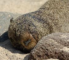 aka-Galapagos-2006-03-19_equ0040.jpg