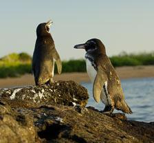 aka-Galapagos-2006-03-20_equ0047.jpg