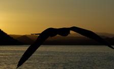 aka-Galapagos-2006-03-20_equ0050.jpg