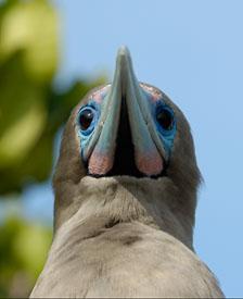 aka-Galapagos-2006-03-21_equ0053.jpg