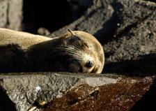 aka-Galapagos-2006-03-21_equ0057.jpg