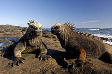 aka-Galapagos-2006-03-22_equ0063.jpg