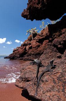 aka-Galapagos-2006-03-22_equ0071.jpg