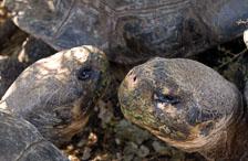 aka-Galapagos-2006-03-23_equ0073.jpg