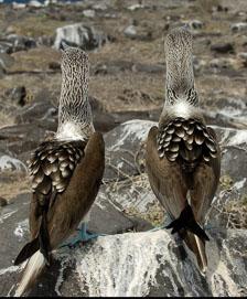 aka-Galapagos-2006-03-24_equ0085.jpg