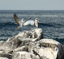 aka-Galapagos-2006-03-24_equ0089.jpg