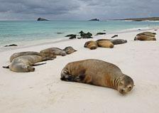 aka-Galapagos-2006-03-24_equ0090.jpg