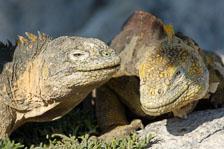 aka-Galapagos-2006-03-25_equ0101.jpg