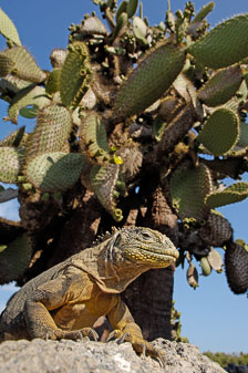 aka-Galapagos-2006-03-25_equ0102.jpg
