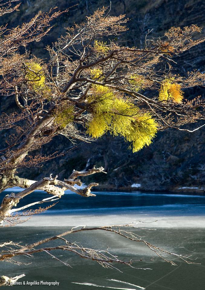 Beech tree on the altos del toro hike andreas angelika - Altos del toril ...
