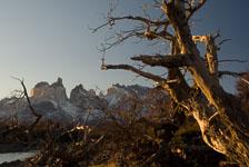 aka-Torres-del-Paine-2006-07-29__D2X11434-Edit.jpg