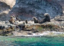 aka-Robinson-Crusoe-Island-2006-12-27__D2X13222.jpg
