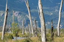 aka-Carretera-Austral-2007-03-06__D2X15877.jpg