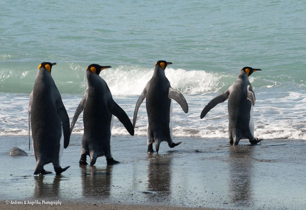 aka-Antarctic-Quest-2009-01-27__D3X10290.jpg